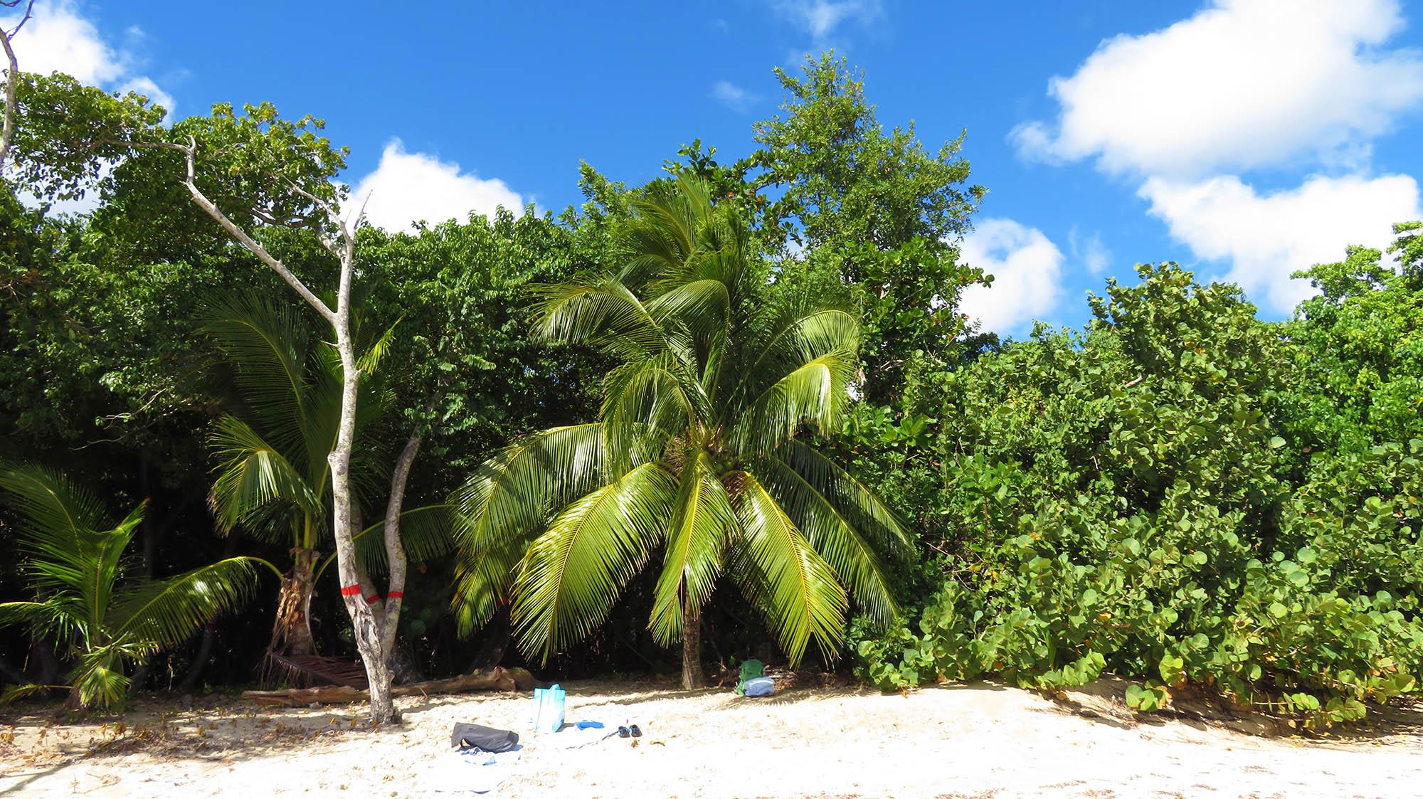 Karibik Kreuzfahrt Martinique Strand Sainte-Luce