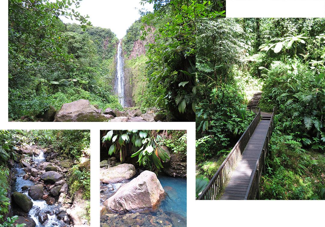 Guadeloupe Regenwald Ausflug Mein Schiff 5