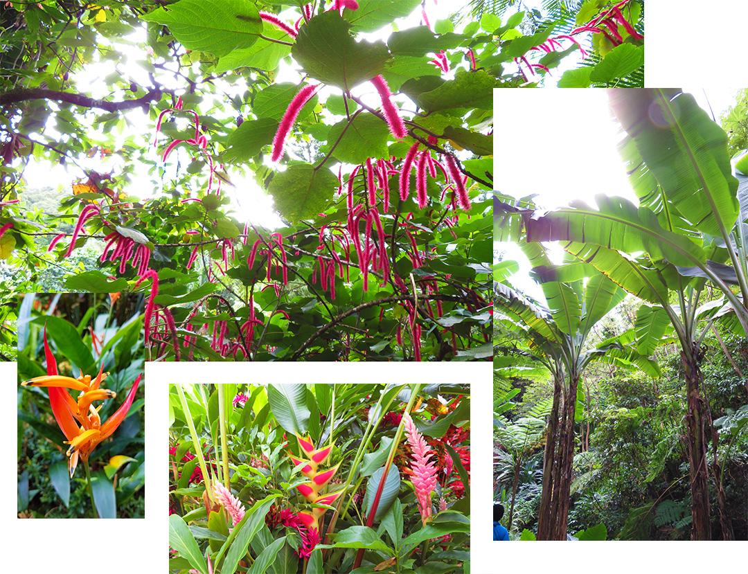 Diamond Garten St Lucia