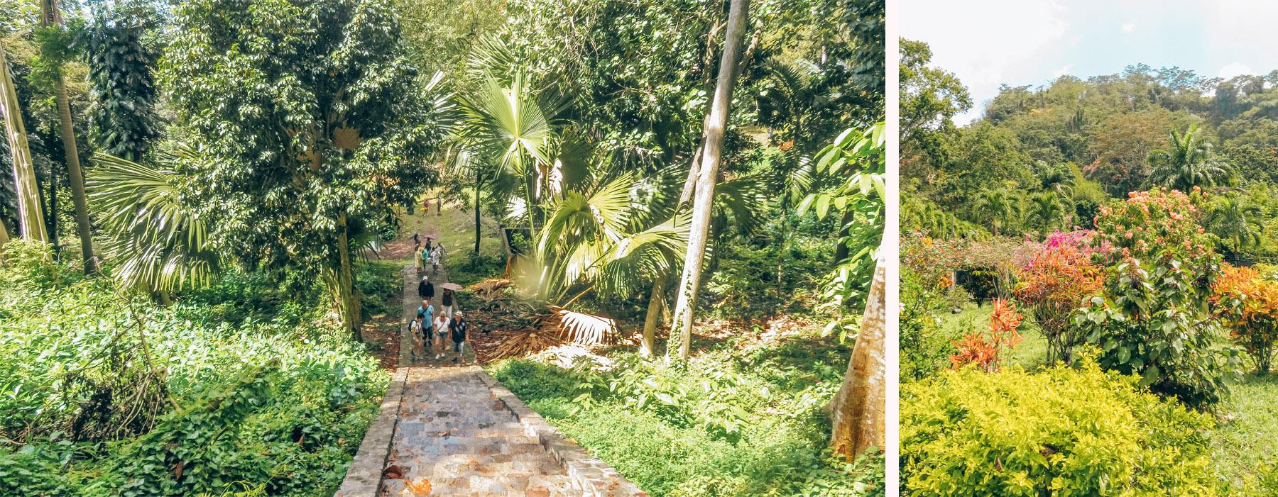 Dominica Karibik Kreuzfahrt Roseau Botanischer Garten Jacks Walk Trail