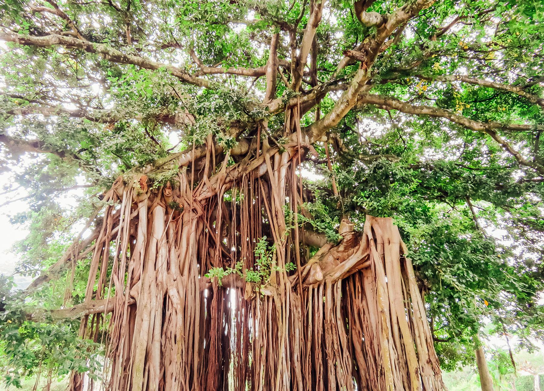 Dominica Karibik Kreuzfahrt Roseau Botanischer Garten