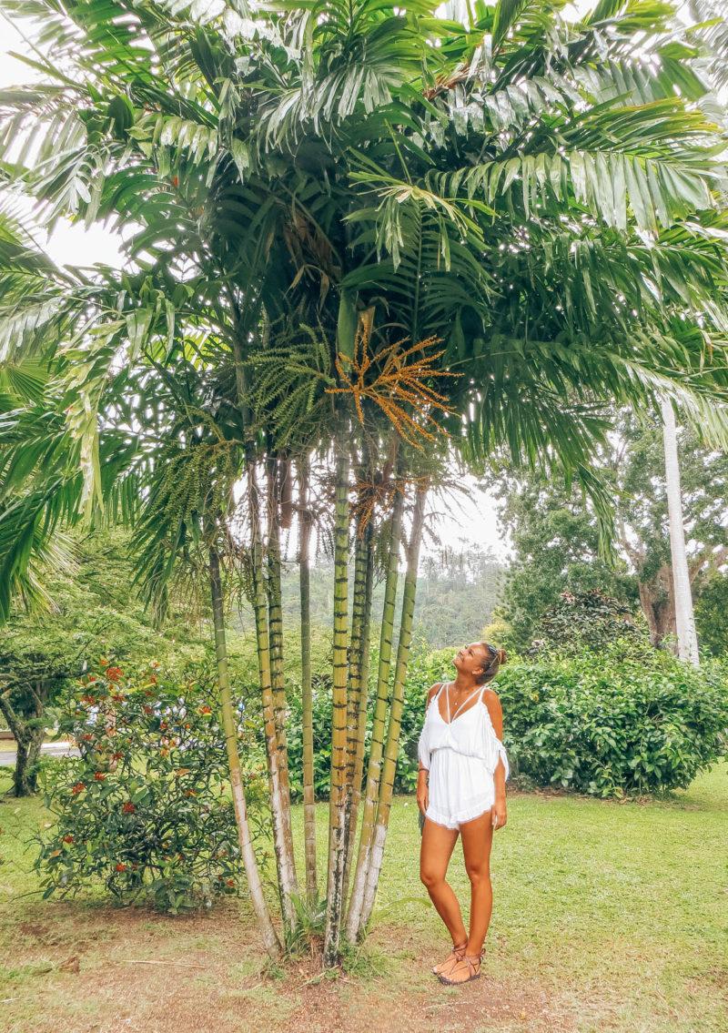 Dominica Roseau Reisetagebuch Karibik Kreuzfahrt