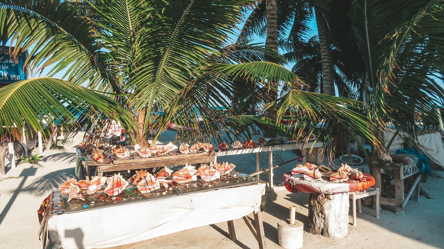 Belize Caye Caulker Muscheln
