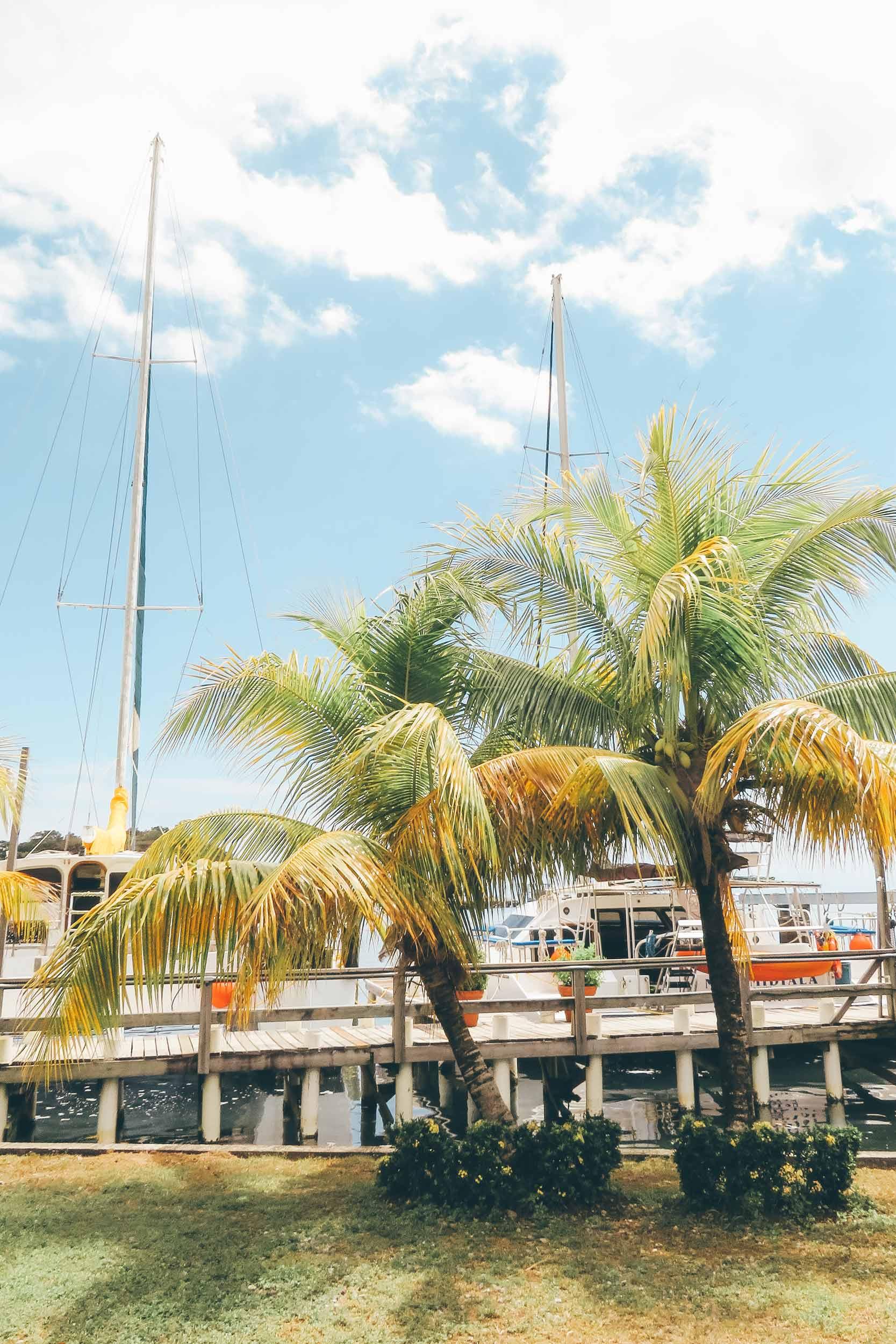 Mittelamerika-Kreuzfahrt-Roatan-Honduras-Ausflug-Palmen
