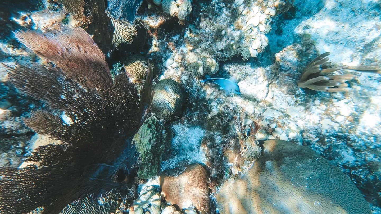 Mittelamerika-Kreuzfahrt-Roatan-Honduras-Korallenriff
