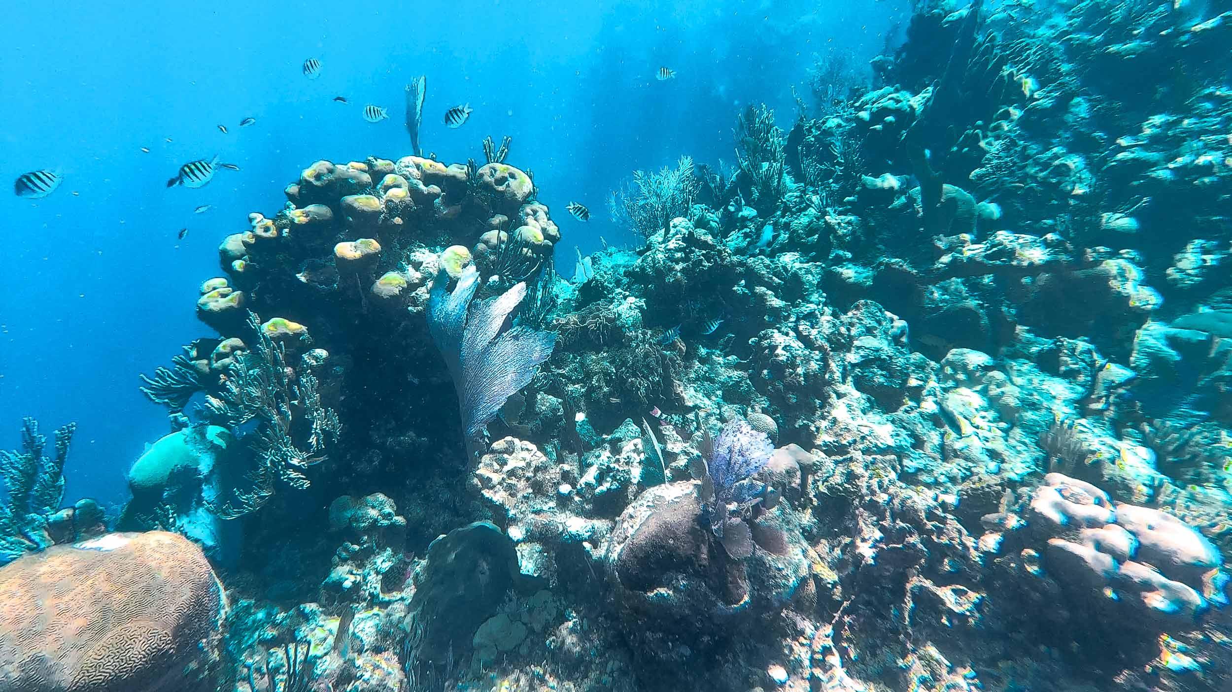 Ausflug-Schnorcheln-Roatan-Honduras-Korallenriff-2