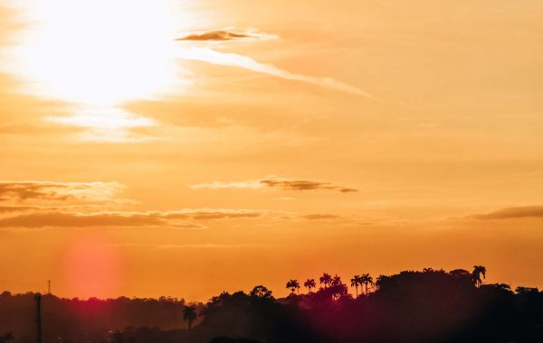 costa-rica-sonnenuntergang-palmen-2